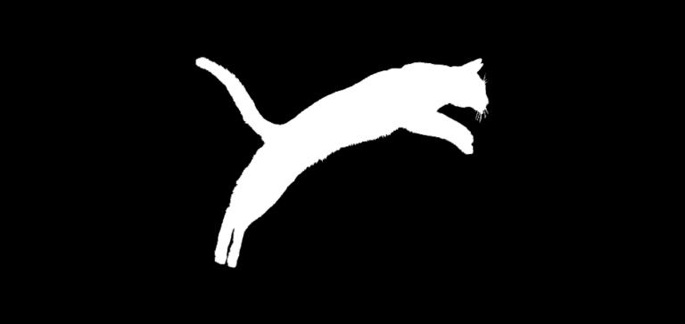 Купить лучшего абиссинского котенка PanZimur